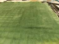 dunkelgrüne Wolle aus legen und anfilzen